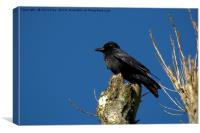 A Crow, Canvas Print