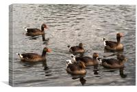 Family of Greylag Geese, Canvas Print