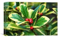 Euonymus in Berry, Canvas Print