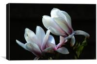 Magnolia and house guest, Canvas Print
