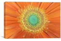 Gerbera Sunshine, Canvas Print
