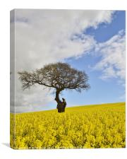 Old Tree in Rapeseed Field 2, Canvas Print