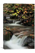 Nant Dyar in Autumn, Clydach Gorge 2., Canvas Print