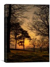 Sunset over Bradgate, Canvas Print