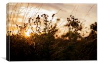 Sunset on Mersea Island, Canvas Print
