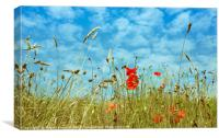 Poppies field, Canvas Print
