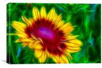 Yellow Gloriosa Daisy, Canvas Print