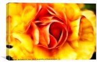 Orange and Yellow Rose, Canvas Print
