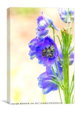 Blue Delphinium in the Spring - Larkspur, Canvas Print
