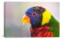 Rainbow Lorikeet - Trichoglossus moluccanus, Canvas Print