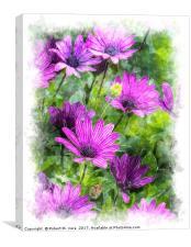 Osteospermum Plants, Canvas Print
