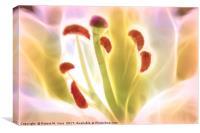 Digitally Enhanced White Lily Flower, Canvas Print