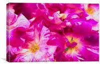 Roses Flowers, Canvas Print
