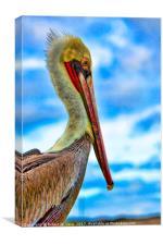 Portrait of a Brown Pelican, Canvas Print