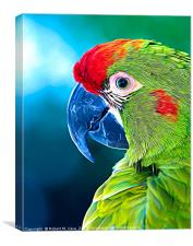 Red-fronted Macaw, Canvas Print