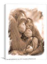 Orangutan Sisters, Canvas Print