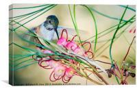 Hummingbird Feeding, Canvas Print