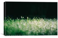 Spectacular grassy morning dew, Canvas Print