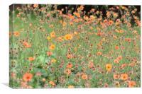 Red Campion wild flowers, Canvas Print