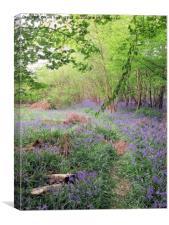 Hidden Bluebell Wood, Canvas Print