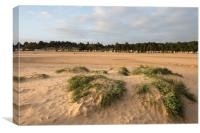 Sand dunes and beach huts at Wells Next the Sea, Canvas Print