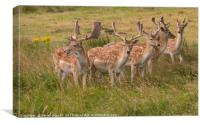 Oh Deer, Canvas Print