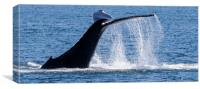 Humpback Whale Tail, Canvas Print