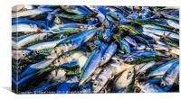 Fresh Sardines, Canvas Print