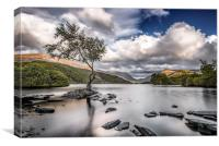 The Lone Tree - Llyn Padarn, Canvas Print