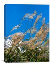 Pampas Grass on the Beach, Canvas Print