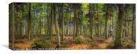 Woodland Scene, Canvas Print