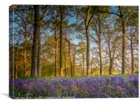 Sunrise in the Bluebell Wood, Canvas Print