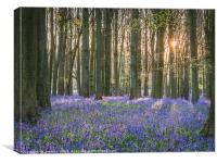 Sunlit Bluebell Wood, Canvas Print