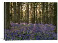 Sunny Morning and Bluebells , Canvas Print