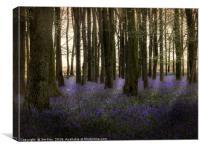 Bluebell Dawn, Canvas Print
