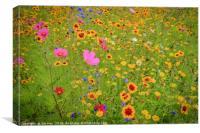 Wild Flowers Meadow, Canvas Print