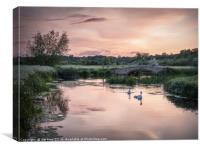 Swans Heading Home, Canvas Print