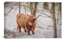 Highland Cow - Snow Scene, Canvas Print
