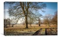 Felbrigg Hall  Winter Parkland View, Canvas Print