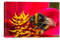 Pollen Gatherer Macro, Canvas Print
