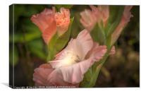 Gladioli Flower, Canvas Print