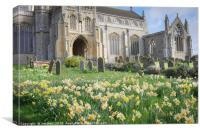 Daffodils at St Margaret  Cley next the Sea, Canvas Print
