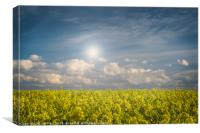 Blue Sky and Yellow Flowers on a Sunny Day, Canvas Print