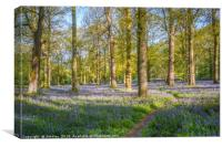 A Walk in the Bluebell Wood, Canvas Print
