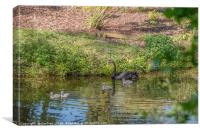 A Black Swan with Four Cygnets, Canvas Print