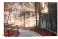 Forest road enlightened by autumn sunshine, Canvas Print