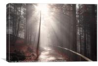 Sun rays over forest road in autumn decor, Canvas Print