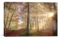 Sun rays through a misty autumn forest, Canvas Print