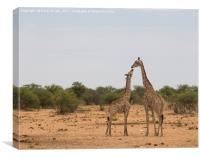 Giraffe mother and baby, Canvas Print
