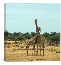Mother and baby giraffe, Canvas Print